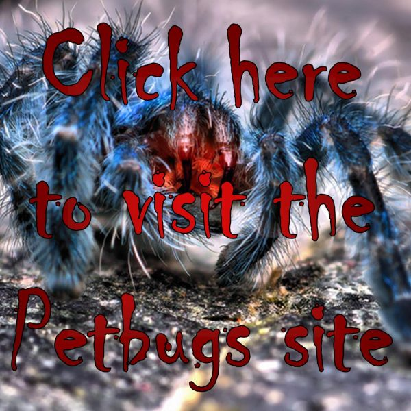 Tarantulas and roaches on Petbugs.co.za